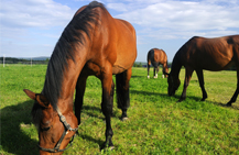 Equine Insurance in Hagerstown, and Baltimore, MD